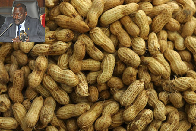 Découverte de bruches nuisibles : Le Vietnam suspend ses importations d'arachide du Sénégal