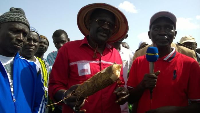 Agriculture : Vers un changement positif et durable de la physionomie de l'agriculture à Ngnith (ministre)