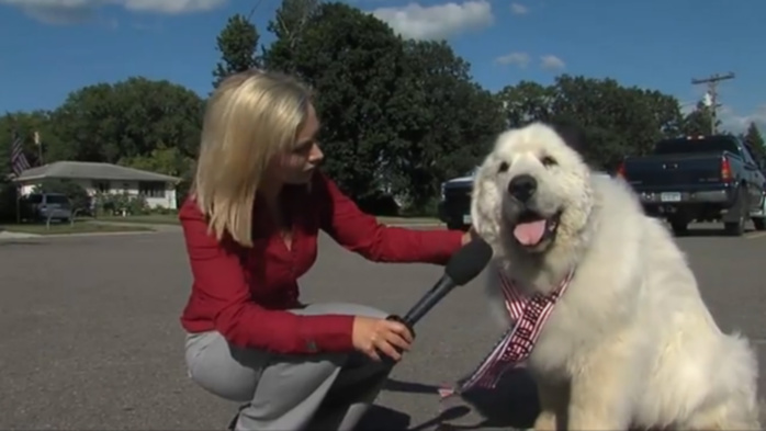 Ah, l'Amérique : un chien a été élu maire dans une ville du Minnesota