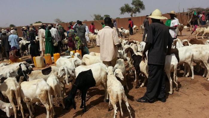 Comment la sécheresse fragilise les éleveurs en Afrique de l'Ouest