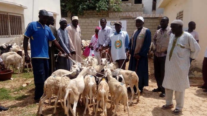 Remise de 207 moutons à des familles démunies : l'appui de HAI sollicité aussi pour les veuves d'hommes de tenue