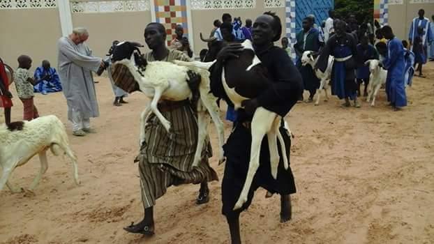 TOUBA - Le Khalife des Baay-Fall offre 360 moutons au Khalife Général des Mourides