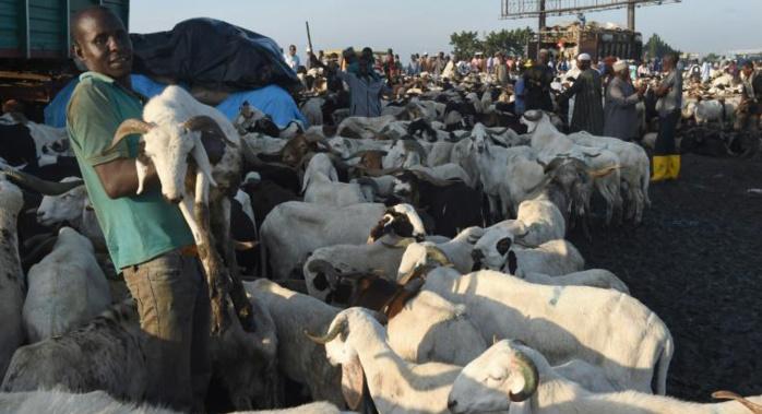 NIGERIA : Les ventes de moutons de l'Aïd s'effondrent à cause de la crise