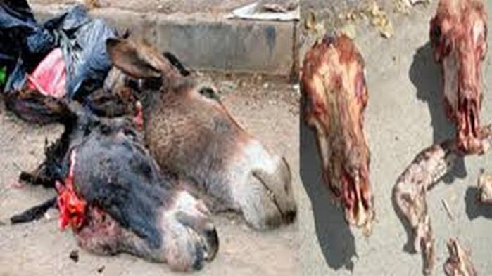 Révélations de l'ordre des vétérinaires : Plus de 800 ânes ont été abattus en un mois