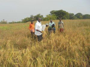 PNAR à Kolda : Le village de Soukou entre en force dans la « Nericalisation ».
