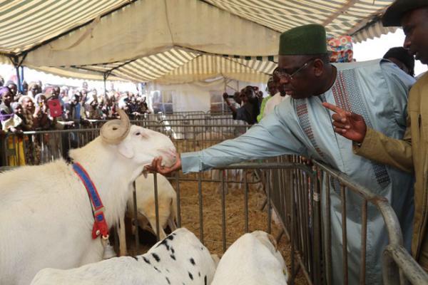 Agriculture, élevage et autosuffisance alimentaire : Les promesses du Chef de l'Etat