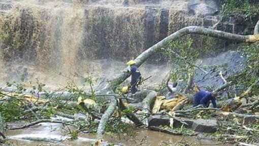Ghana : Vingt lycéens tués par des chutes d'arbres