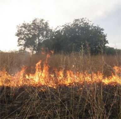 Incendie au ranch de Dolly : 60 ha de tapis herbacé ravagé par les flammes