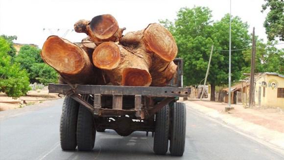 Coupe de bois illicite : Des acteurs dénoncent la recrudescence du trafic de bois vers la Gambie