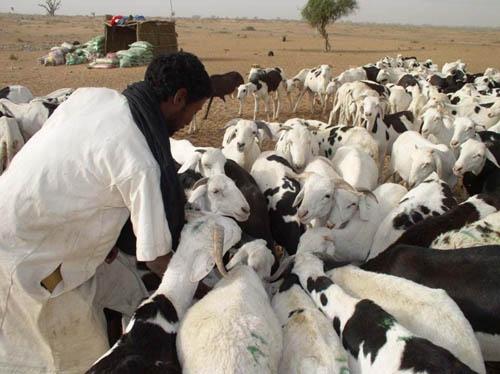 TABASKI / Le gouverneur de la région de Louga plaide pour un meilleur accès des éleveurs au crédit
