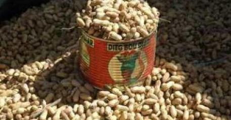 Campagne de commercialisation de l'arachide : Les paysans commencent à brader leurs produits dans le Saloum