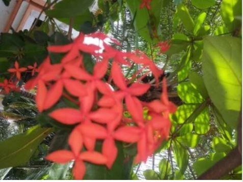 Les plantes médicinales, une niche méconnue : Un patrimoine à protéger pour les générations futures