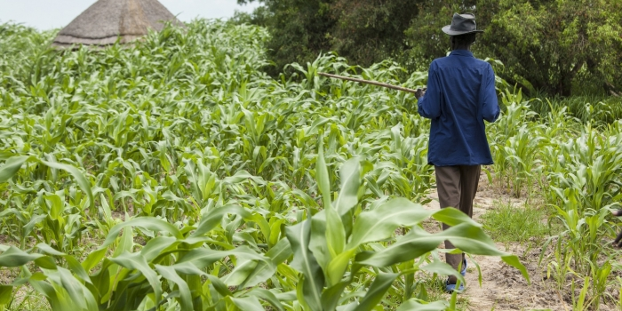 Participation du secteur agro-sylvo -pastoral au Pse : La Fédération Nationale des Plateformes Agricoles du Sénégal (Fn-Pas) voit le jour.