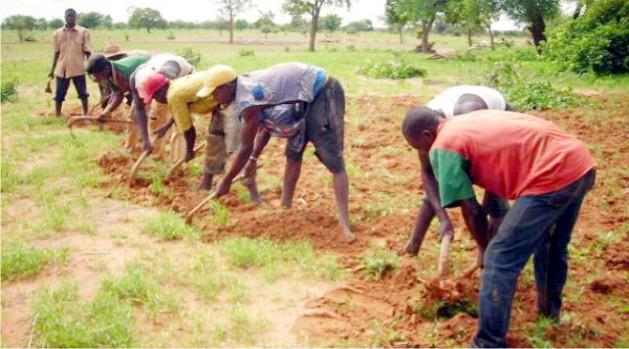 Filière agricole : « Les performances doivent être revues à un niveau plus élevé » incite la Banque mondiale