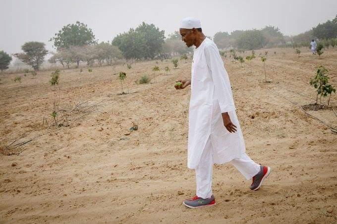 Le président nigérian Muhammadu Buhari en visite dans sa ferme à Duara.