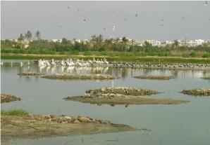 Préservation des Zones Humides : Le Sénégal choisi pour abriter la pré conférence des parties de la convention Ramsar