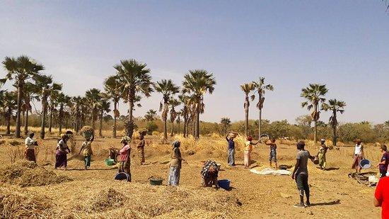 Kaffrine : 12.000 producteurs enrôlés dans la Cmu