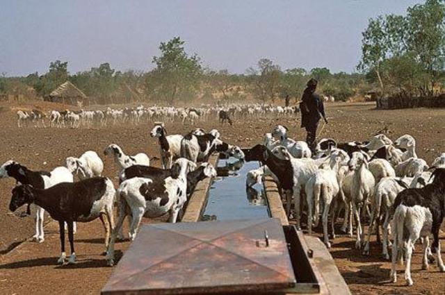 PUDC : Les cultures fourragères en expérimentation à Doly