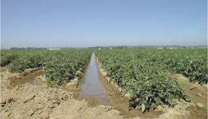Bilan Campagne Tomate industrielle 2018 dans la Vallée  : Des problèmes de remboursement du crédit ont empêché les paysans d'atteindre l'objectif de 80.000 tonnes