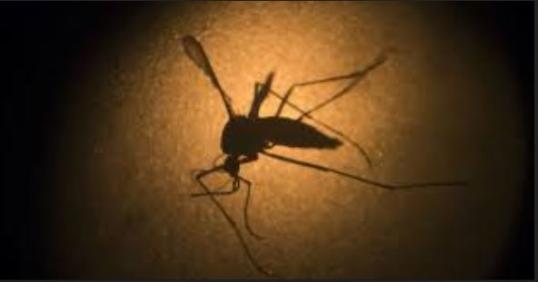 Fatick : un autre cas de dengue découvert