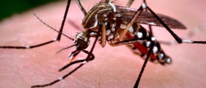 Propagation de la maldie : 12 cas de dengue à Fatick
