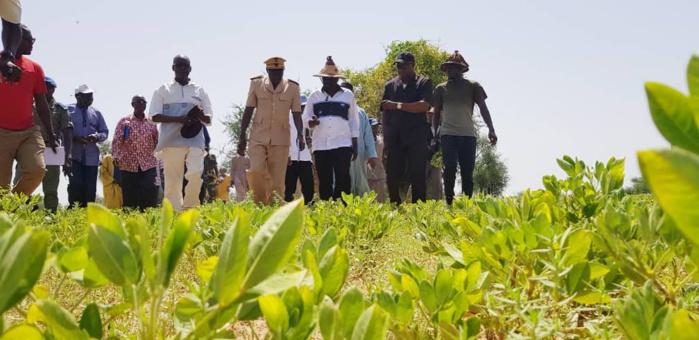 Tournée du ministre de l'agriculture dans la région de Louga.