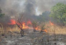 Podor :  Un feu de brousse d'une rare violence déclaré dans le village de Biddy (commune de Guédé)