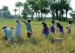 Pour l'ONG Cicodev, l'accaparement des terres au Sénégal est un problème majeur (AUDIO)