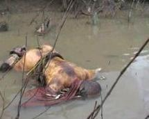 Ziguinchor : une femme retrouvée morte à Kadior