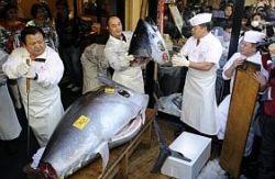 Plus de 520 millions de francs cfa pour acquérir un thon rouge!
