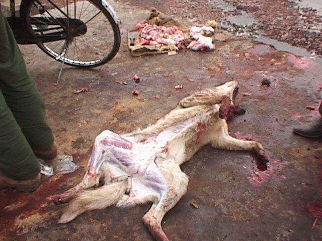 Un vendeur de viande de chien arrêté à Tamba.