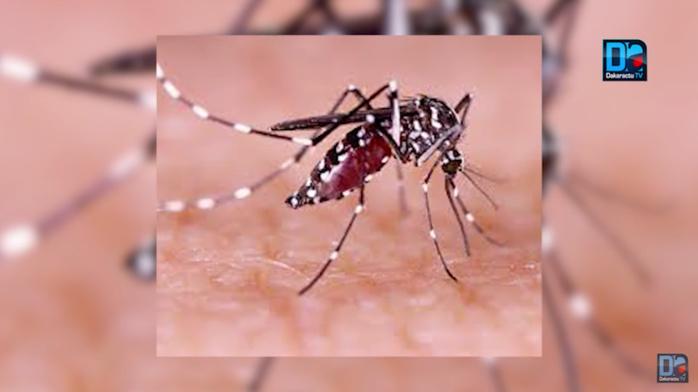 Kaolack : Un cas de Dengue détecté aux abattoirs