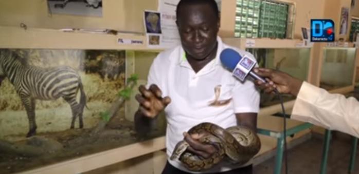 """Fallou Guèye sur le présumé serpent qui hante le sommeil des Hlm Las Palmas : """"Quand je suis entré, j'ai entendu un ronflement terrifiant... La montagne peut accoucher d'une souris"""""""