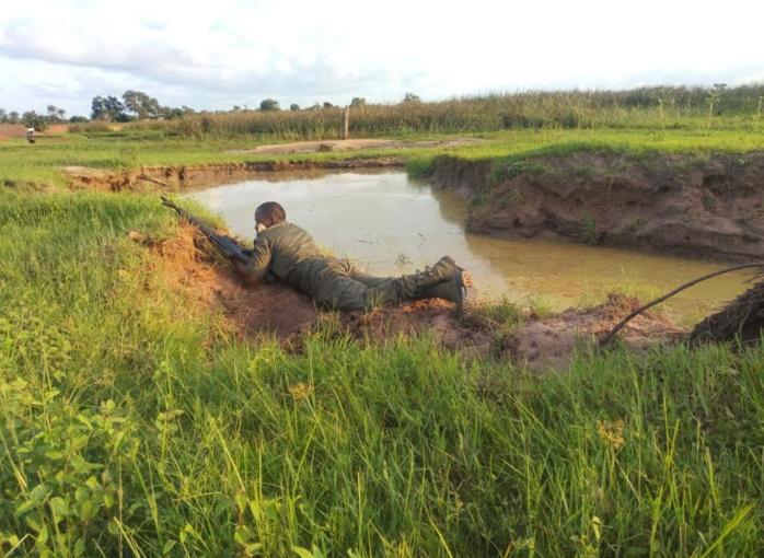 OFFENSIVE CONTRE LE TRAFIC DE STUPEFIANTS AU CENTRE : La Brigade commerciale des Douanes de Karang intercepte 391 Kg de chanvre indien en une semaine.