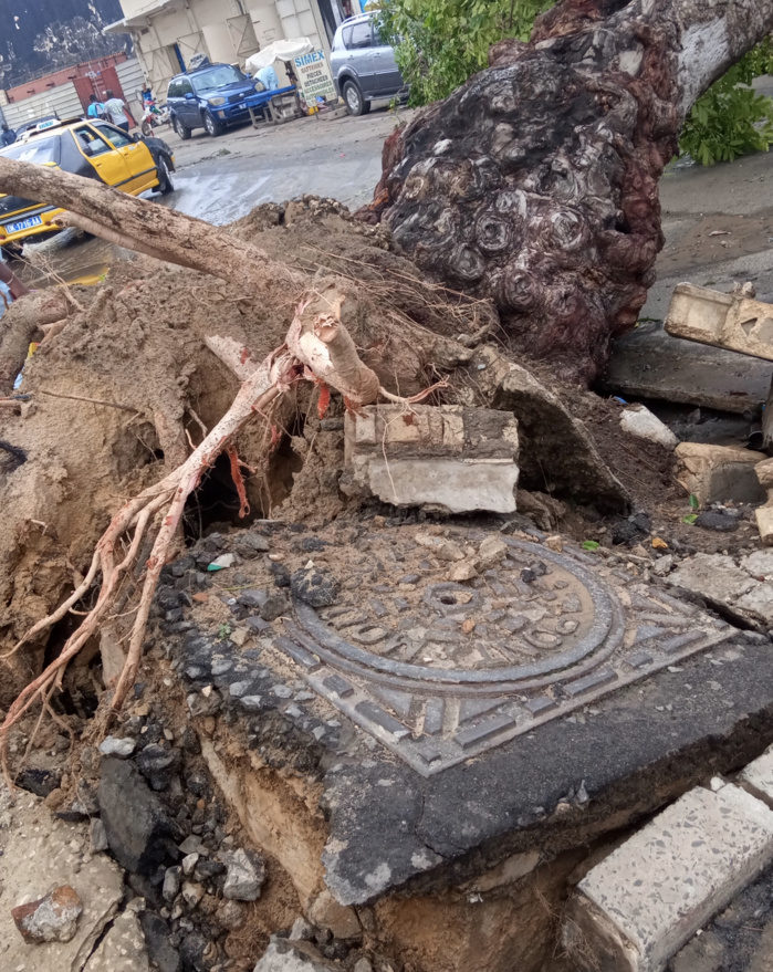 Vent violent à Dakar : 2 arbres tombent sur l'avenue Lamine Guèye provoquant une coupure d'électricité.