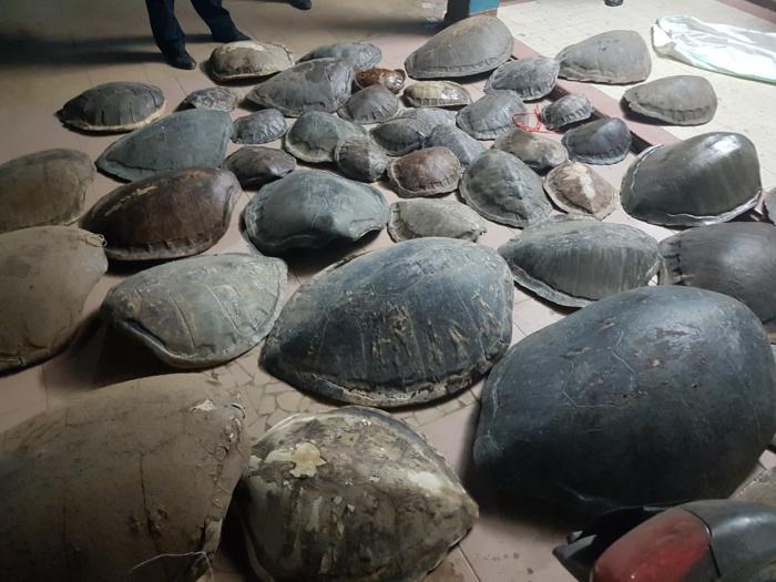 Opération combinée de la SU, des Parcs Nationaux et Eagle : arrestation de 2 présumés trafiquants de carapaces de tortue marine