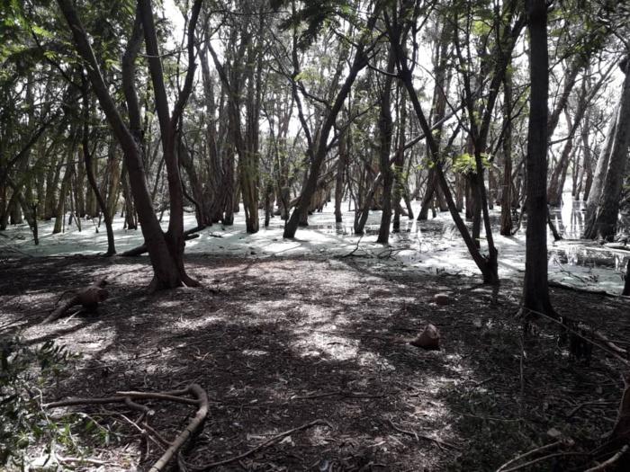 Le parc forestier de Hann se meurt…