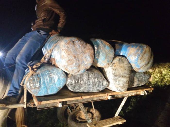 LUTTE CONTRE LE TRAFIC DE LA DROGUE : Ocrtis saisit 600KG de chanvre indien.