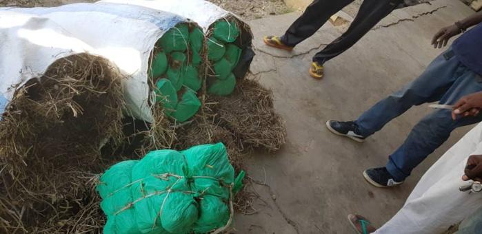 LUTTE CONTRE LE TRAFIC DE DROGUE : 210 Kg de Chanvre saisis par la Brigade maritime des Douanes de Foundiougne