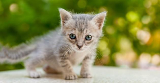 Insolite à l'Assemblée nationale : Un chaton entre et perturbe la plénière.