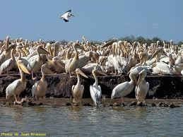 De la nécessité d'une réelle synergie gouvernementale pour la reprise du tourisme sénégalais