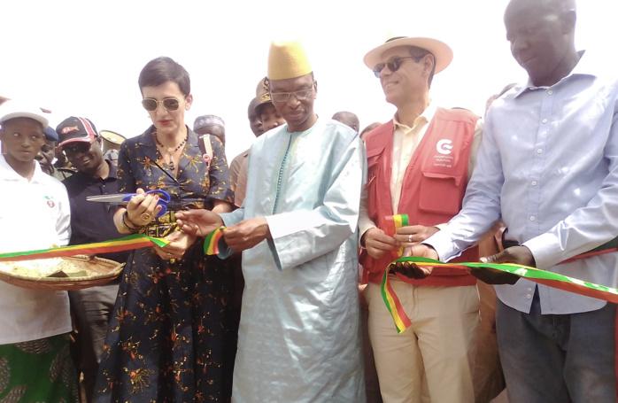 Lutte contre le chômage et l'émigration clandestine à Kolda : Les fermes « naatangué » comme début de solution…