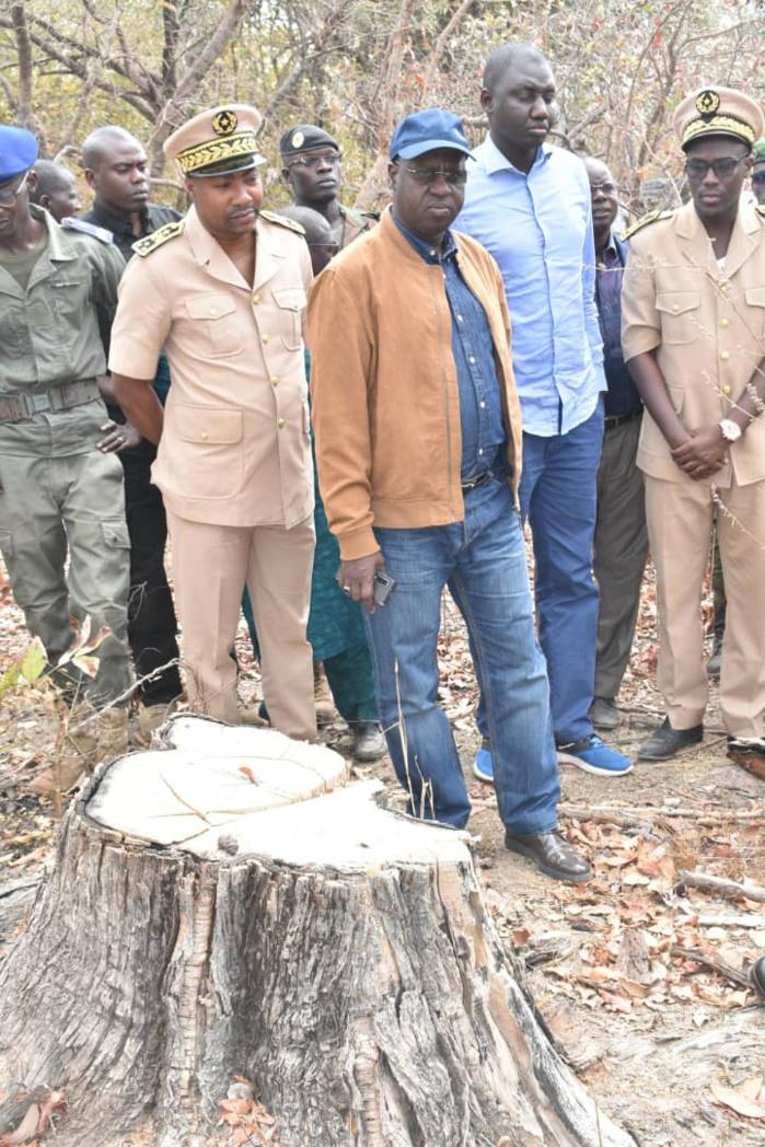Kolda / Un arsenal de guerre pour la coupe de bois saisi : « Nous opposerons une réplique farouche… » (MEDD)