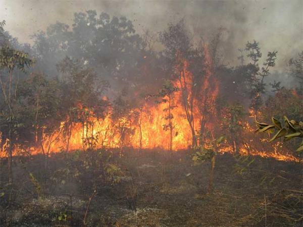 Un feu de brousse s'est déclaré à l'aéroport de Ziguinchor.