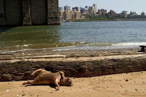 Un monstre à Manhattan  (PHOTOS)