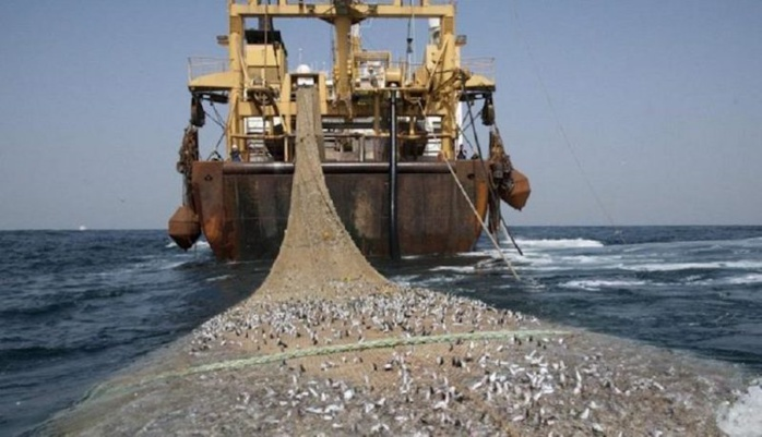 Coalition nationale contre l'octroi des licences de Pêche industrielle : Lettre ouverte à  Son Excellence Monsieur Macky SALL, Président de la République du Sénégal