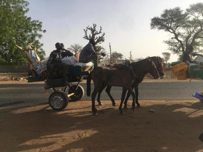 TRANSPORT CLANDESTIN : 5 charrettes interceptées par la gendarmerie.