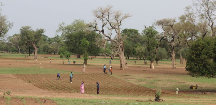 Hivernage / Bassin arachidier : Des associations de paysans interpellent l'État sur le transport des cultivateurs résidant hors de leurs localités.