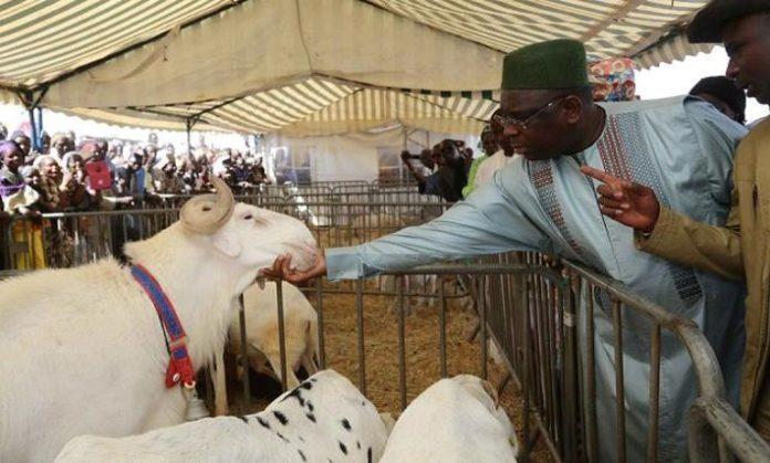 COVID-19 ET TABASKI : Le président Macky Sall veut un approvisionnement correct du pays en moutons.