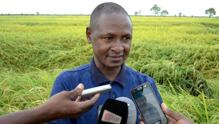 Alpha Bocar Baldé, DG de la Sodagri : « Cette année on va saturer le bassin en emblavure avec quatre mille hectares pleins»